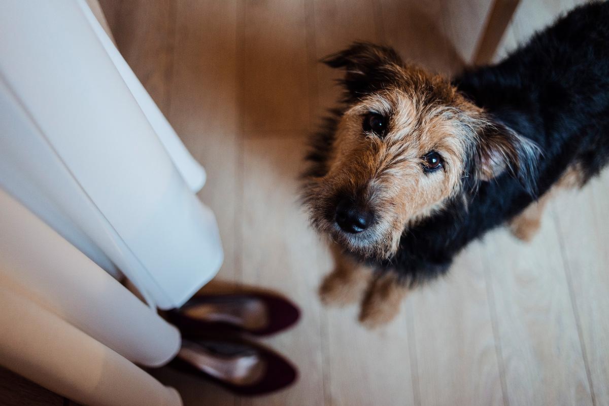 pies na slubie - naturalna fotografia slubna
